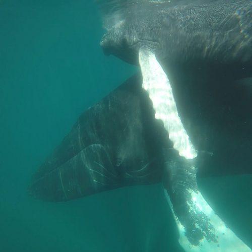 Baleineau Mi Mar Maravilloso One