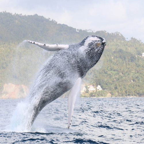 Baleineau Mi Mar Maravilloso Six
