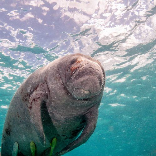 Remi Swimming El Tour Caribe Mi Mar Marvilloso