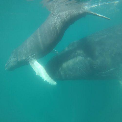 Baleineau Mi Mar Maravilloso Five