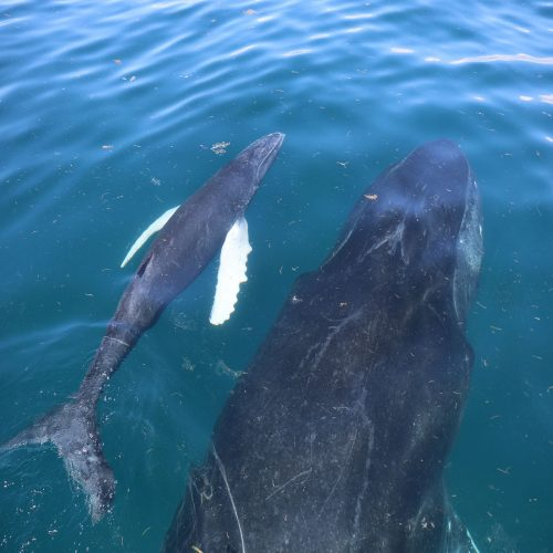 Baleineau Mi Mar Maravilloso Three