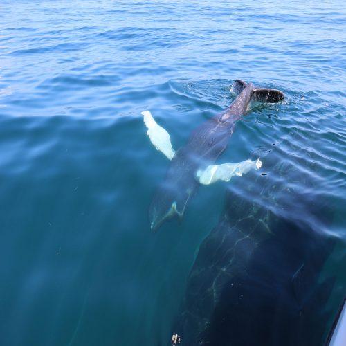 Baleineau Mi Mar Maravilloso Two